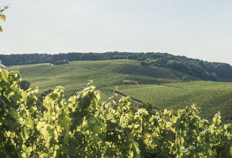 Weinberge Luxemburger Mosel © Visit Moselle Luxembourg header