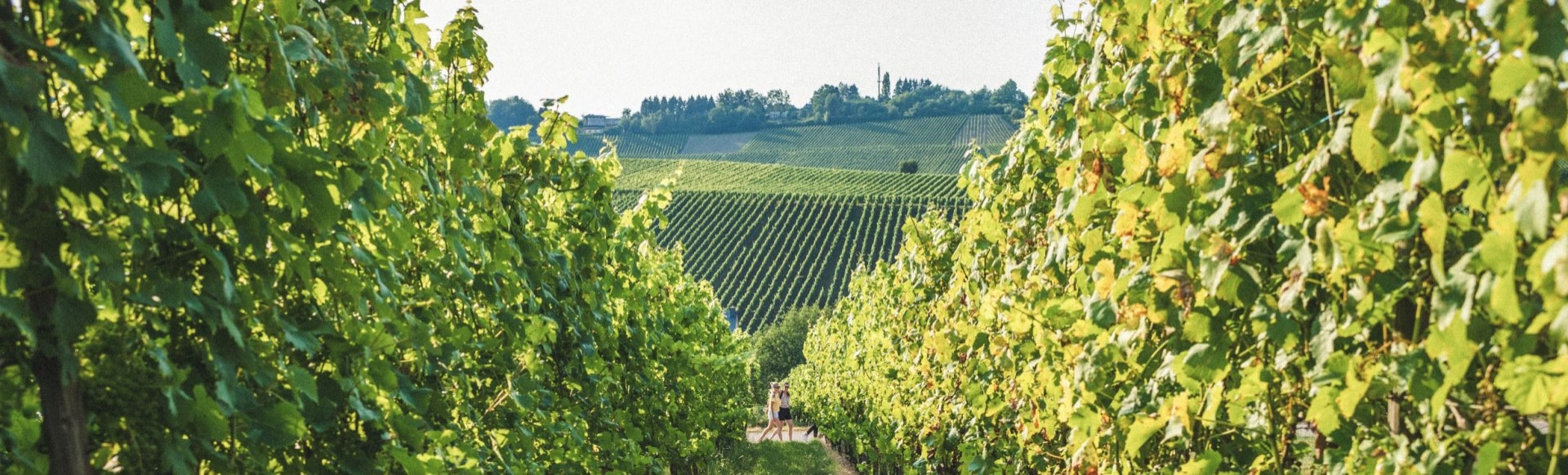 Header Vineyards Wellenstein