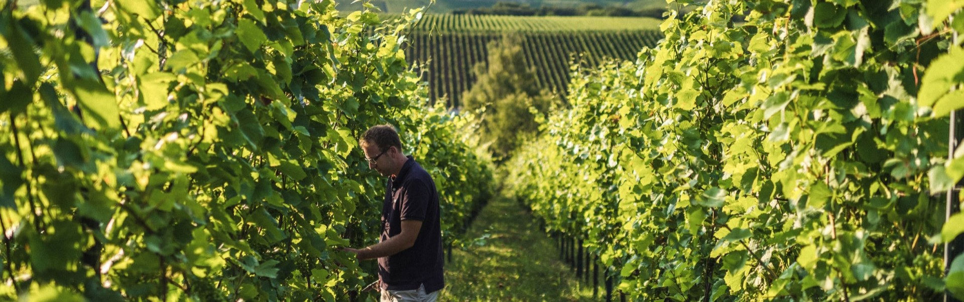 Header Winegrower © Visit Moselle Luxembourg