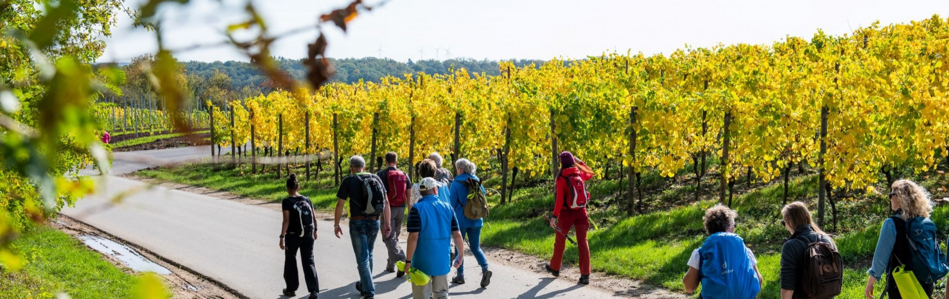 Harvest Hiking Vineyards Harvest  ©Visit Moselle Luxembourg